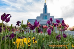 Draper temple 2017_3-472