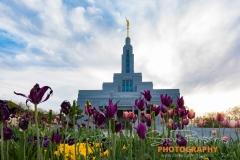 Draper temple 2017_5-474