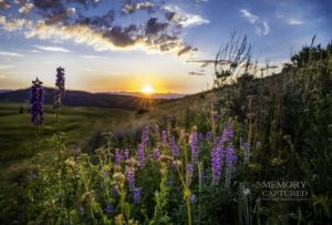 Sunset wildflowers.jpg