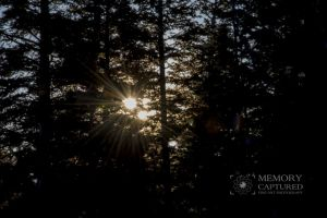 sunrise in the pines-c0.jpg