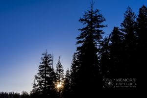sunrise in the pines_1-c83.jpg