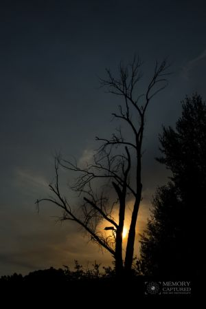 sunrise tree 2.jpg