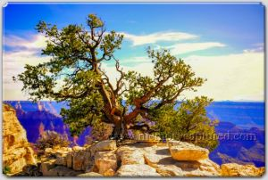 Grand Canyon HDR edit-c39.jpg
