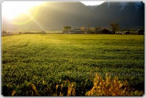 Spring Dew on field-c79.jpg
