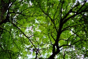 Gazing through canopy at lagoon-c33.jpg