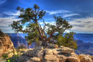 Grand Canyon HDR 1-c31.jpg