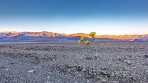 death valley february 2016_4.jpg