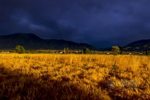Wheat in the storm_12.jpg