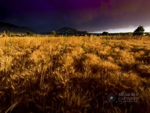 Wheat in the storm_16 18x24.jpg